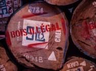 Bois illégal