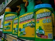 "This picture taken on June 15, 2015 shows a bottle of Monsanto's 'Roundup' pesticide in a gardening store in Lille. French Ecology Minister Segolene Royal announced on June 14, 2015 a ban on the sale of American biotechnology giant Monsanto's popular weedkiller from garden centres, which the UN has warned may be carcinogenic. The active ingredient in Roundup, glyphosate, was in March classified as ""probably carcinogenic to humans"" by the UN's International Agency for Research on Cancer (IARC). AFP PHOTO / PHILIPPE HUGUEN / AFP / PHILIPPE HUGUEN"